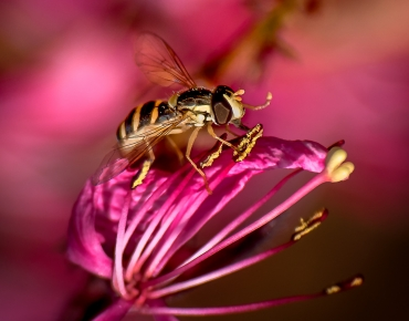 Macro Photographie - Cours initiation photo